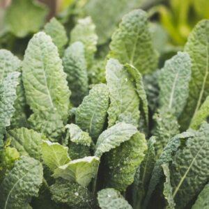 Pregnancy, Fertility, and Breastfeeding Diet: Dark, Leafy Greens